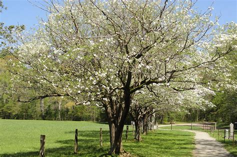 best shade tree for backyard best shade trees choosing the best shade trees for your yard