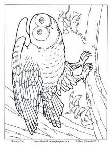 coloring pages animals realistic realistic animal coloring pages coloring home