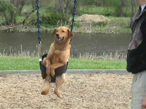 dog in baby swing dog in swing dog on swing dogs love swings playground