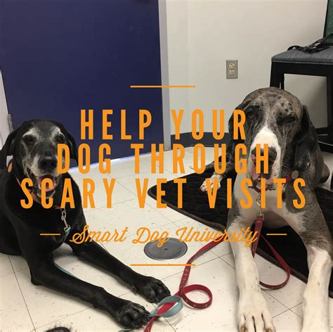 puppy vet visits help your through scary veterinary visits smart