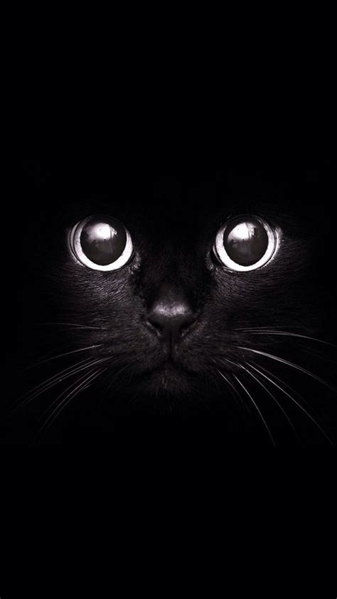 cat wallpaper for iphone 6 black cat irresistable cuteness cats animal iphone