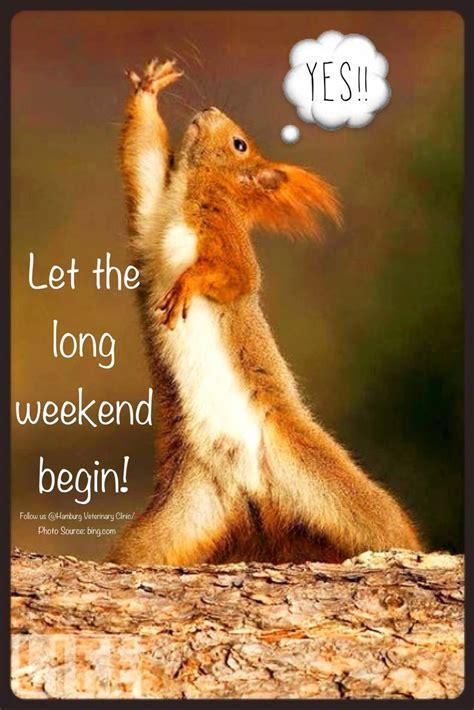 the weekend images weekend weekend animal