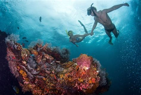dive skins the differences between snorkeling free and skin diving