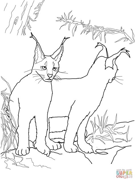 african cats coloring pages 301 moved permanently