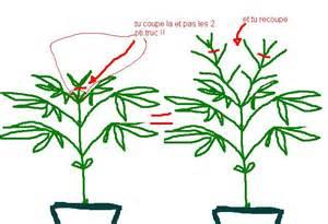 comment couper pour que 231 a parte en buisson m 233 li m 233 lo