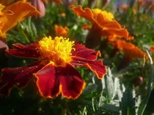 Bunga Hana 5cm 2 jalan2 bersama ahna wa ahya mencari mawaddah sakinah wa rahmah