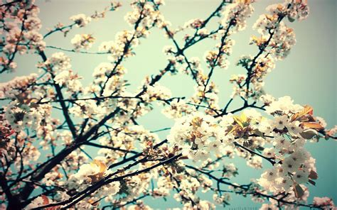spring wallpaper hd tumblr flower tumblr wallpaper desktop for desktop uncalke com