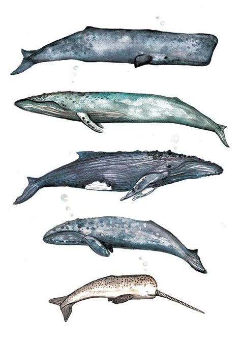 bilder kinderzimmer wal whale collection watercolour illustration home decor wall