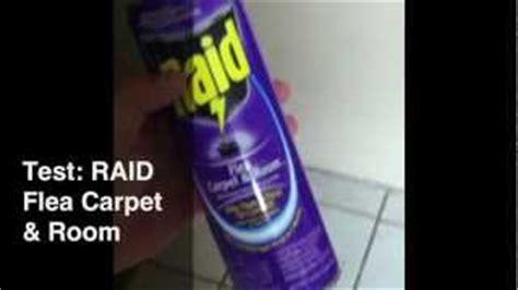 lysol kills fleas buyerpricercom