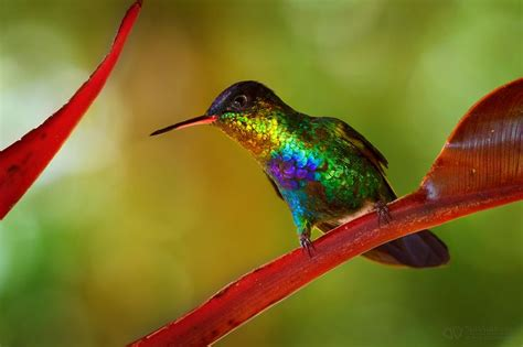 incredible colors i love rainbows and hummingbirds