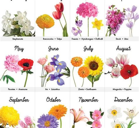 birth month flowers tattoos july birth flower flowers healthy