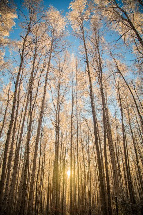 tips  improve  forest photography tree photography