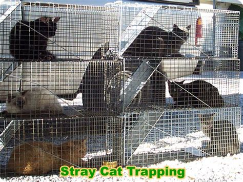 stray cat trap how to catch a stray cat to bring it to the shelter