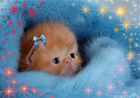 nierenkranke katze wann einschläfern katzen gifs