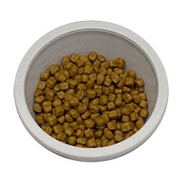 pet food pantry orlando discovery the best healthy