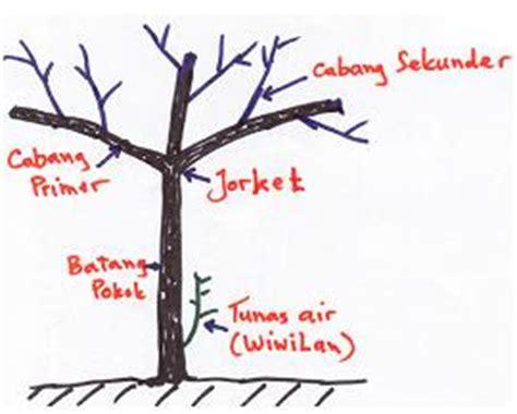 Benih Coklat Kakao Seed Tanam Pohon Coklat Milikmu Sendiri gudang pertanian budi daya tanaman kakao
