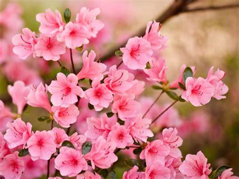 www housebeautiful customer service 60 best spring best 25 hd flowers ideas on pinterest flower images hd