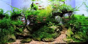 Aquascaping Inspiration 水草缸的攝影 一位剛接觸水草缸的玩家 痞客邦 Pixnet