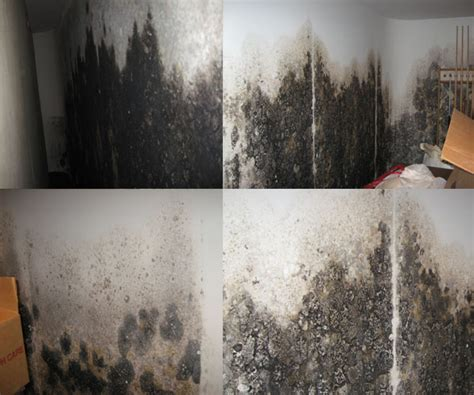 basement mold and mildew basement gallery