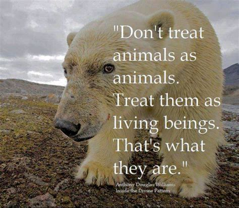 quotes about animals 17 best animal rights quotes on animal rights