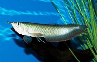 fish n tips large aquarium fish freshwater