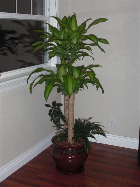 pictures of house plants names and pictures of house plants house pictures
