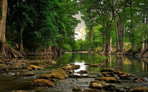 imagenes hd bosques fotograf 237 a de bosque en hd my pictures world