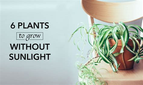 Which Plants Can Survive Without Sunlight | 6 plants that can grow without sunlight