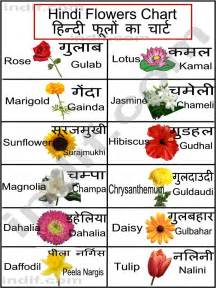 Types of flowers with names images amp pictures becuo