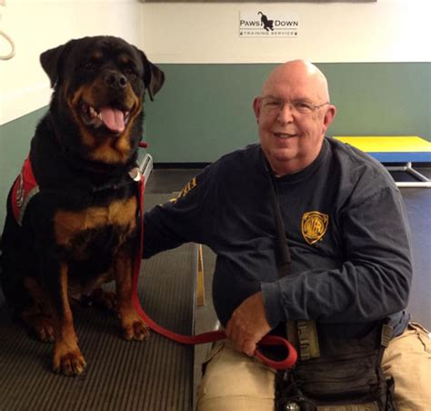 rottweiler service dogs 9 things you didn t about the rottweiler american kennel club