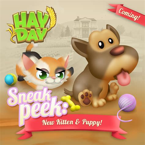 sneak a peek puppies hay day sneak peek new kitten puppy