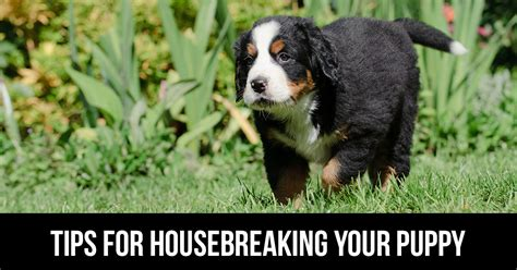 tips for housebreaking a puppy classes menomonee falls how to your wi a puppy