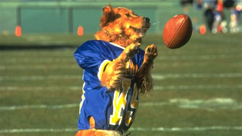 air bud national day all 14 air bud titles ranked si