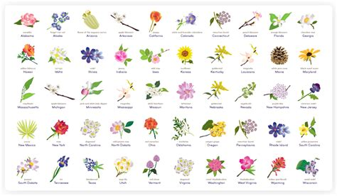 State Flower List | state flowers