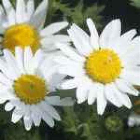 immagini di fiori per desktop sfondi per desktop ris 1920x1080 a tema fiori 1920x1080