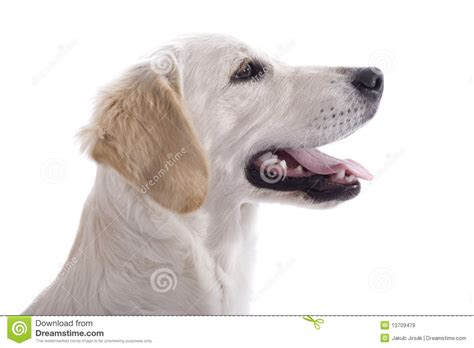 puppy profile puppy profile royalty free stock images image 13709479