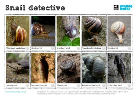 different types of snails in the garden wildlife spotter sheets a to z surrey wildlife trust