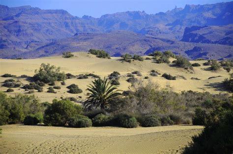 gran canaria turisti per caso gran canaria maspalomas scenari viaggi vacanze e