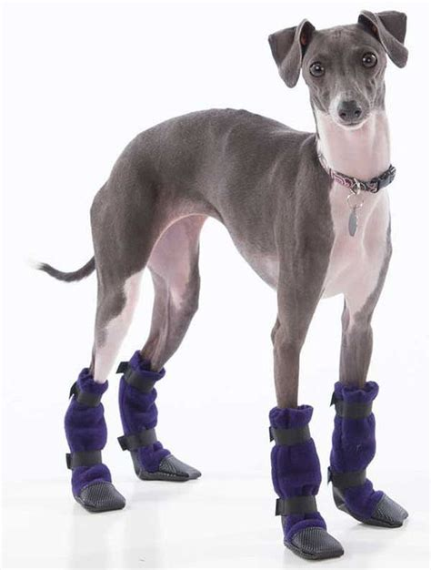 greyhound dogs italian greyhound booties booties shoes boots snow paws and style