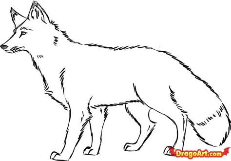 Fox Drawing Outline by How To Draw A Fox Step By Step Forest Animals Animals Free Drawing Tutorial