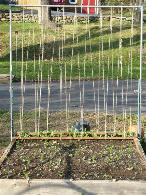 Pea Trellis How Would You String This Pea Trellis Growing Sweet