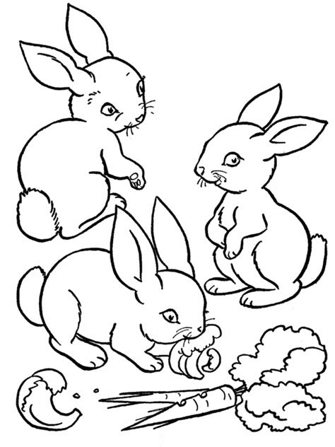 coloring pages for toddlers to print free printable rabbit coloring pages for kids animal place