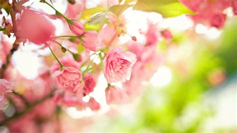spring florals spring flowers hd wallpapers