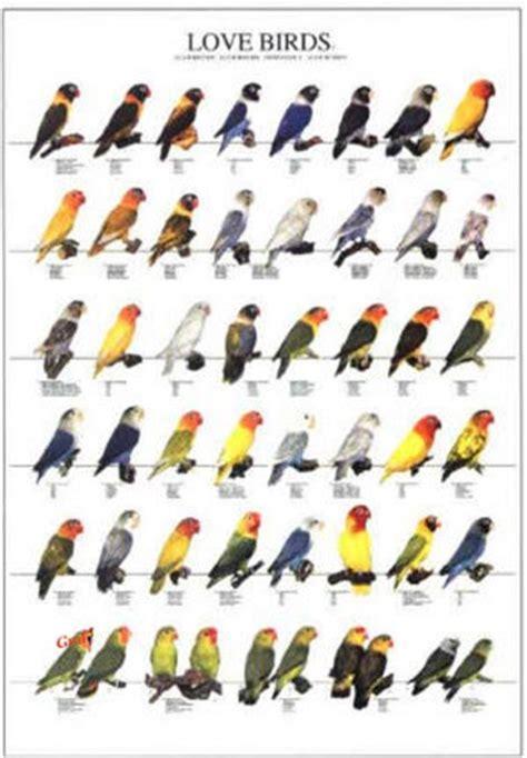 poster oiseaux les diff 233 rentes esp 232 ces d ins 233 parables n