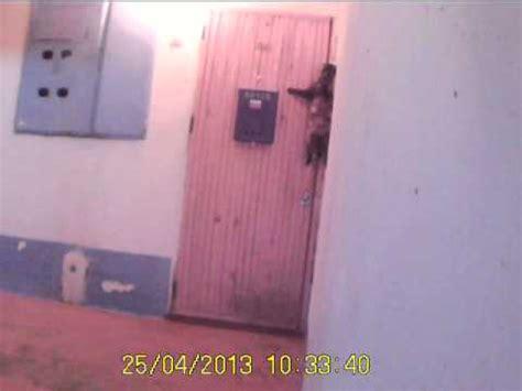 ring doorbell reddit cat in russia rings doorbell to get back home videos