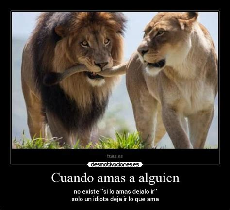 imagenes d leones con frases 15 im 225 genes de leones enamorados im 225 genes de enamorados