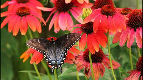 wallpaperbutterflycool macro nature closeup zoom insects stock images  wallpaper