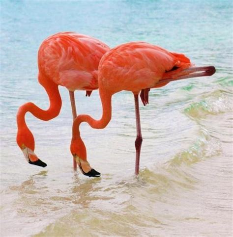 pink flamingos i love pink flamingos pinterest