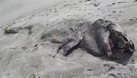 new zealand mysterious sea washes up in new zealand wordlesstech