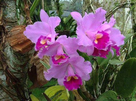 imagenes de orquideas naturales imagens pra ver fotos de orqu 237 deas